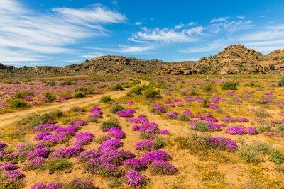Fotomural Wildblumen en Südafrika