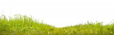Fotomural Земля с зеленой травой на белом фоне