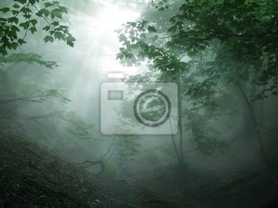 Fotomural 森林