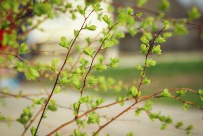 Fotomural Зелень