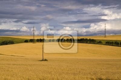 Fotomural поле