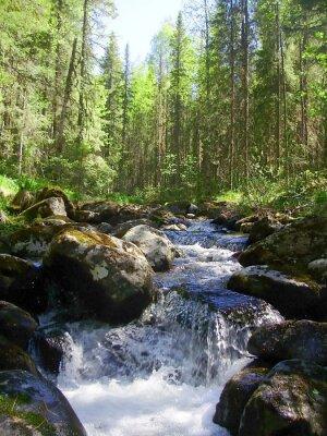 Fotomural El río de montaña en el bosque de coníferas, Горная река в хвойном лесу