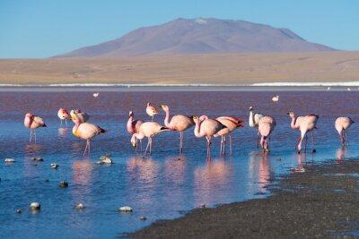 Fotomural Flamencos rosados en