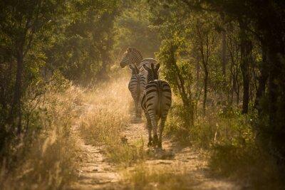Fotomural Zebras en el fondo de la página