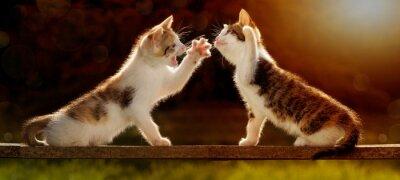 Fotomural Zwei junge Katzen spielen auf einem Holzbrett im Gegenlicht