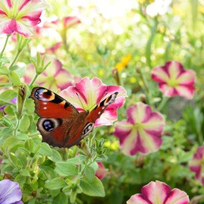Póster 186 mariposa
