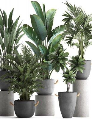 Póster 3d illustration of tropical plants on white background