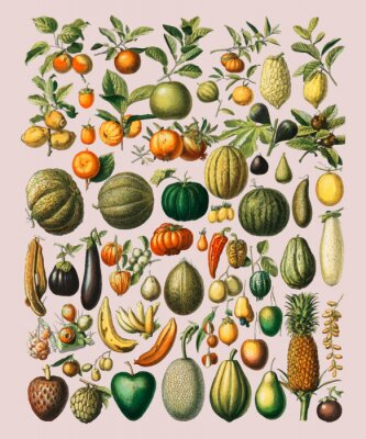 Póster A vintage illustration of a wide variety of fruits and vegetables from the book, Nouveau Larousse Illustre (1898), by Larousse, Pierre, Augé and Claude, Digitally enhanced by rawpixel.