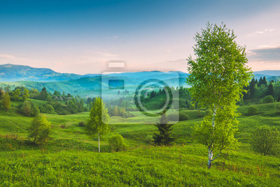 Abedules en una colina verde