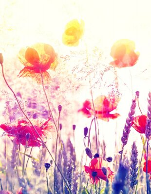 Póster Abstract blurred nature background, summer meadow at sunrise.
