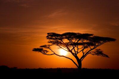 Acacia árbol contra el amanecer en el Serengeti, en Tanzania