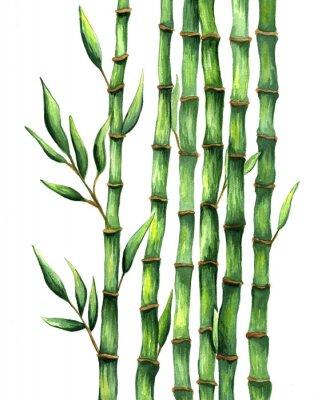 Póster Acuarela dibujada a mano ilustración de bambú