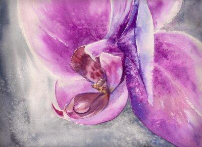 Póster Acuarela jadeo de orquídea rosa flor con gota de agua pequeña.