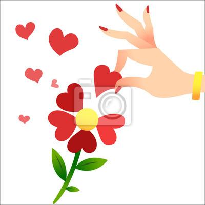 Adivinando en los pétalos. Una mano mujer levanta los pétalos del corazón