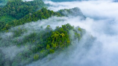 Póster Aerial view of morning mist at tropical rainforest mountain, background of forest and mist, Aerial top view background forest.