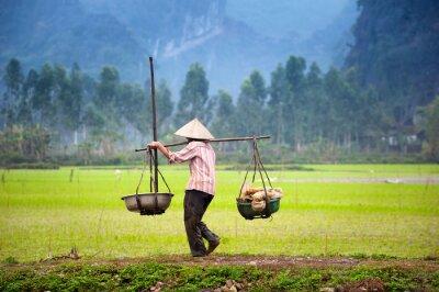 Póster Agricultor vietnamita en arrozales en Ninh Binh, Tam Coc. Agricultura ecológica en Asia