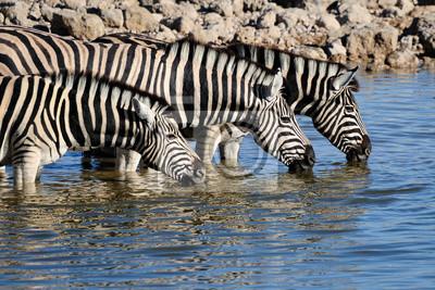 Agua potable de las cebras, Okaukeujo abrevadero
