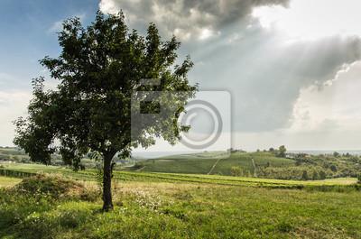 Albero nelle Langhe