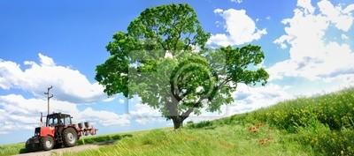 Alimentador de cultivo y árbol verde grande