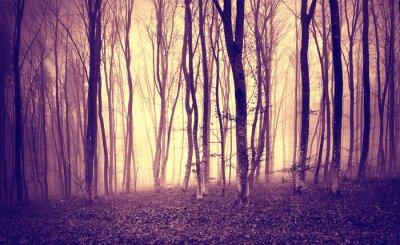 Póster Amarillo púrpura de la vendimia coloreó la luz mística en paisaje asustadizo del bosque.