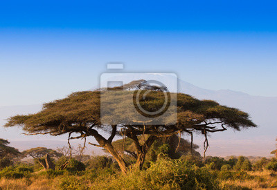 Amazin amanecer africano con árbol de acacia