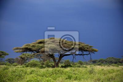 Amboseli durante el atardecer y con nubes de tormenta en el fondo