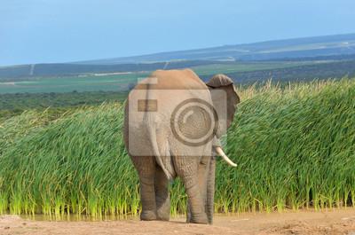 Animales africanos, elefante cerca de la charca, Sudáfrica