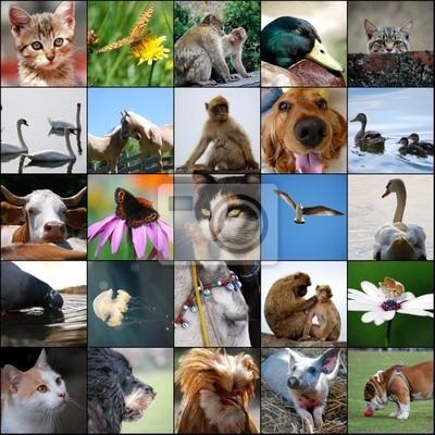 Póster animali