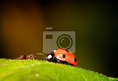 Ant cumple Ladybird