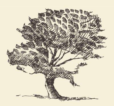 Póster Antiguo árbol de la ilustración de la vendimia bosquejo dibujado mano