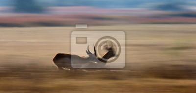 Antílope corriendo por la sabana en Botswana.