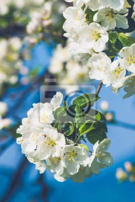 Apple flores de fondo