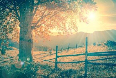 Póster Árbol de otoño de la vendimia al atardecer con rayos de sol, las montañas