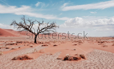 Póster Árbol del desierto