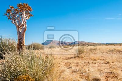 Árbol del desierto de la aljaba