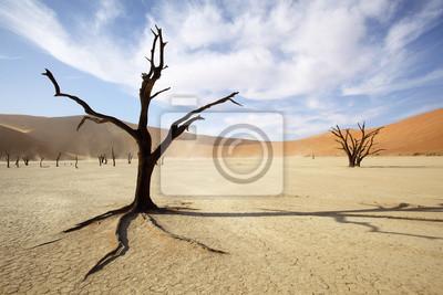 Árbol muerto en Deadvlei