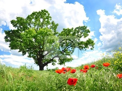 Árbol y amapola