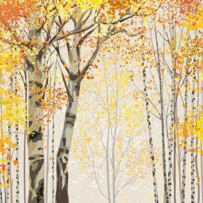 Póster Arboleda del abedul en el otoño de tiempo