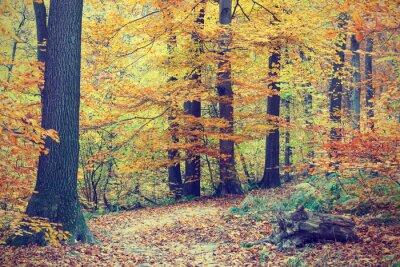 Póster Árboles coloridos del otoño en el bosque, mirada de la vendimia