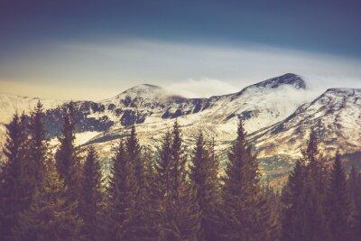 Póster Árboles del otoño en el bosque y la montaña cubierta de nieve en la distancia.