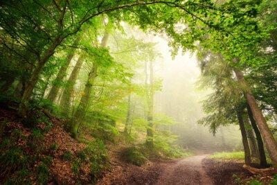 Póster Arco natural de los árboles