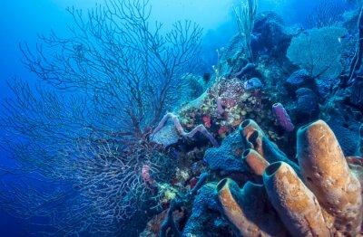 Póster Arrecife de coral submarino