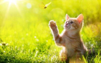 Póster Arte joven gato / gatito caza una mariposa con Contraluz