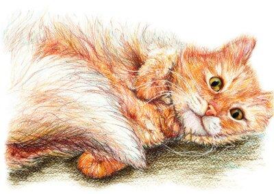 Póster Arte lindo dibujado mano lindo del gato mullido del jengibre
