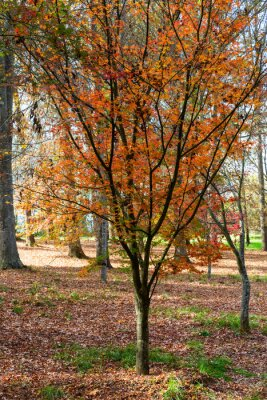 Autumn colored leaves on the tree and the ground