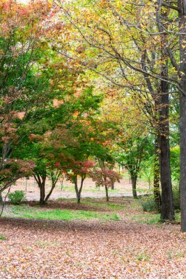 Autumn colored leaves on the trees and on the ground
