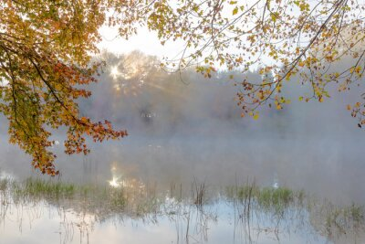 Autumn leaves and mist on the water