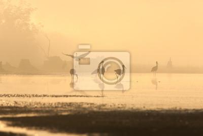 aves en la niebla