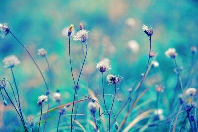 Póster Azul campo de hierbas vintage