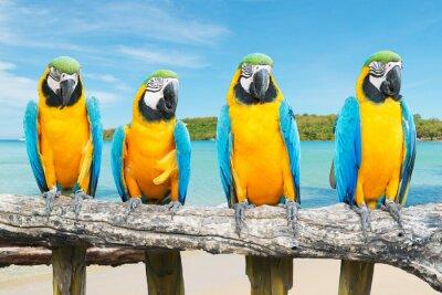Póster Azul y oro Guacamayo en la hermosa playa tropical y el mar